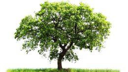 Minden gyermek születése után egy új fával is gazdagodna Budaörs