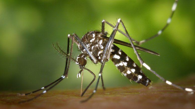 Méhészek figyelem! Szúnyoggyérítés Budaörsön