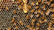 Méhészek figyelem! - Szúnyogirtás